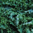 Kale: Make room on your plate Popeye, it's the new spinach!
